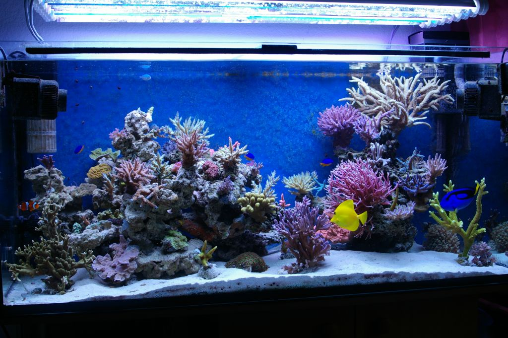 décoration aquarium recifal